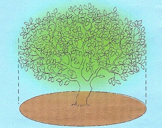 Csepegtető öntözés házikertben - a fához tartozó talajfelszín
