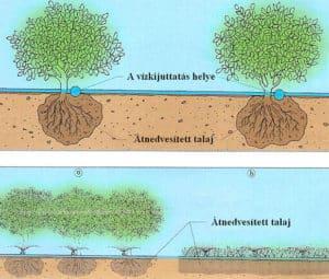 Csepegtető öntözés házikertben - a vízkijuttatás helye és az átnedvesített talaj mértéke