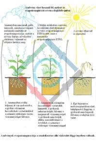 A növények fejlődése - evapotranspirációs folyamat ábra