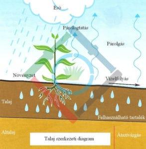 A növények fejlődése - talajszerkezeti diagram