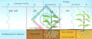 A növények fejlődése - a növények vízigénye 2