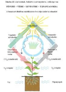 A növények fejlődése - a növények vízigénye 1